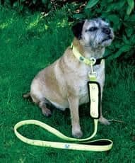 Woofmasta dog lead flash yellow
